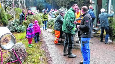Weihnachtsbaumschlagen im Buhlert als Familienerlebnis: Rund 600 Bäumchen fanden auch dieses Mal den Weg aus dem Gemeindewald in die gute Stube. Foto: A. Hoffmann