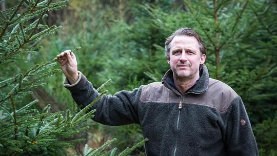 """Für die Weihnachtsbäume müssen keine Waldflächen geopfert werden: Im Buhlert wachsen sie im Bereich der entlang der Straße verlaufenden Stromleitungen. """"An diesen Stellen dürfen die Bäume ohnehin nur eine gewisse Größe erreichen. So lassen sich diese Flächen auch sinnvoll nutzen"""", erläutert Gemeindeförster Dietmar Wunderlich. Foto: A. Gabbert"""